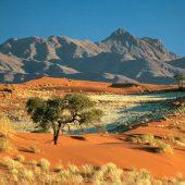 wolwedans-dunes-lodge-landscape-590x390